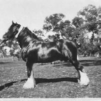 Babington, William with Clydesdale.jpg